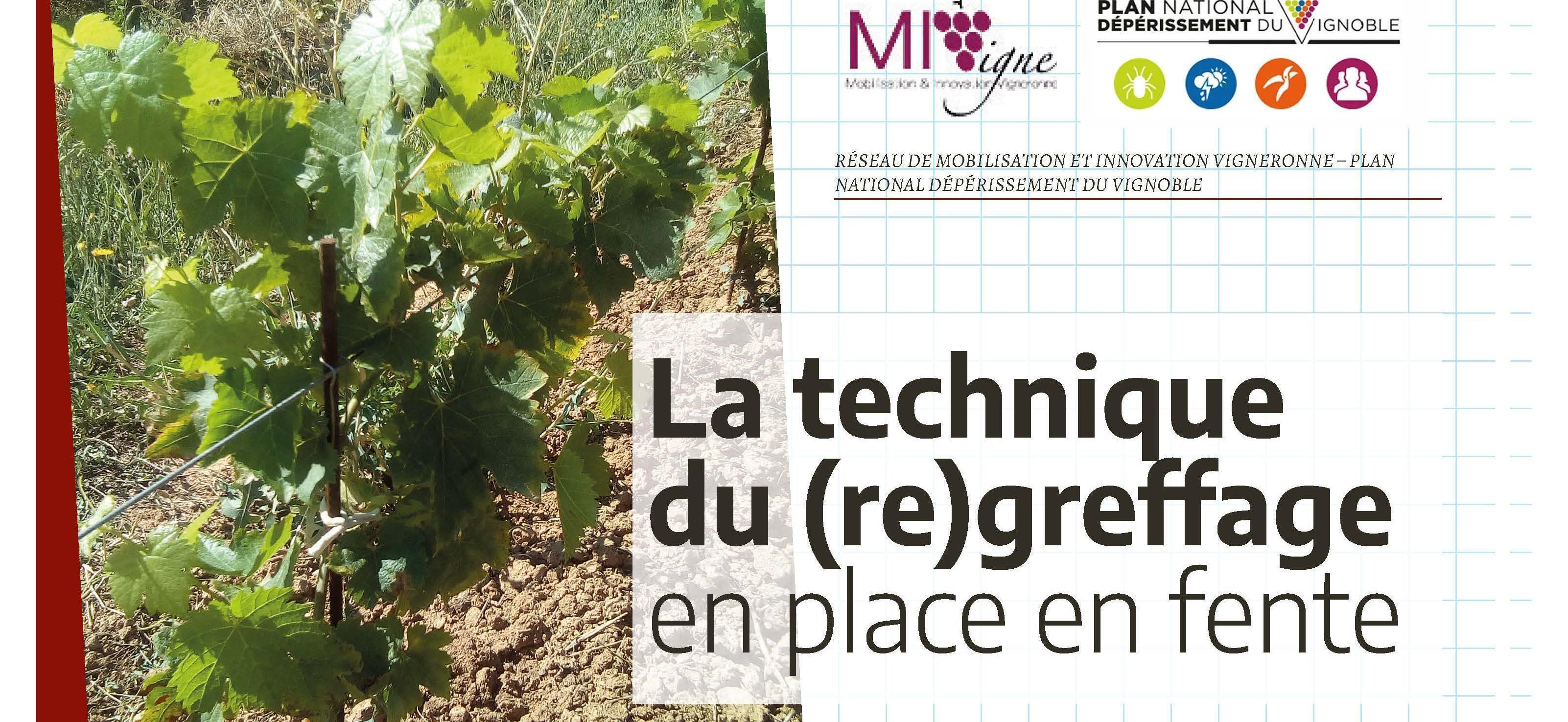 La technique du (re)greffage en place en fente